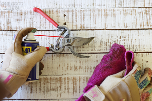 Spring Maintenance Tips for Your Boston Area Home